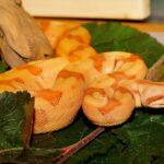 Orange Snake Dream – Meaning and Symbolism