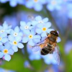 Biblical Meaning of Insects in Dreams